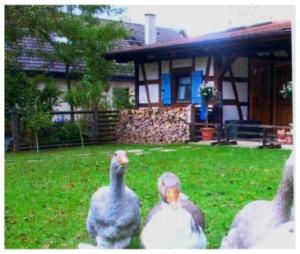 Bader_Heimatmuseum2